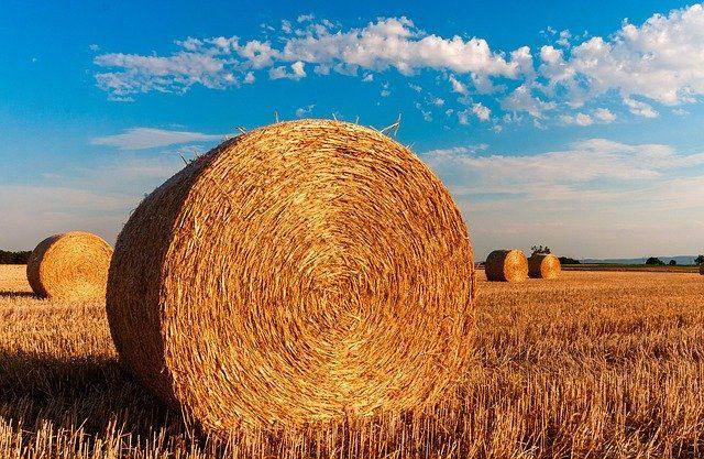 cropped-straw-bales-726976_640.jpg